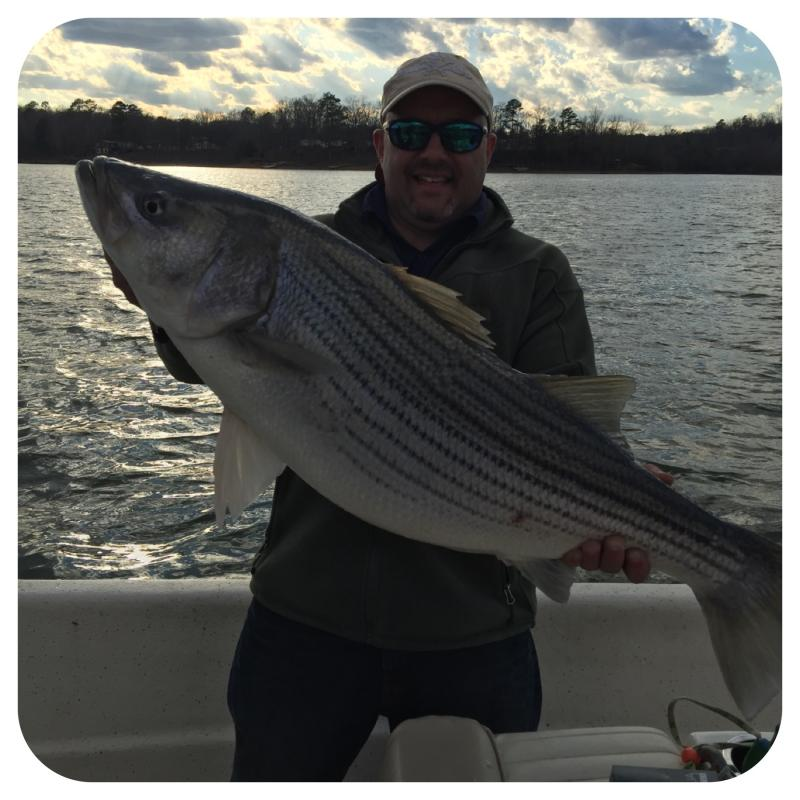 2016 Smith Lake Striped bass Caught By Fishing 24-7 Guide Service Client