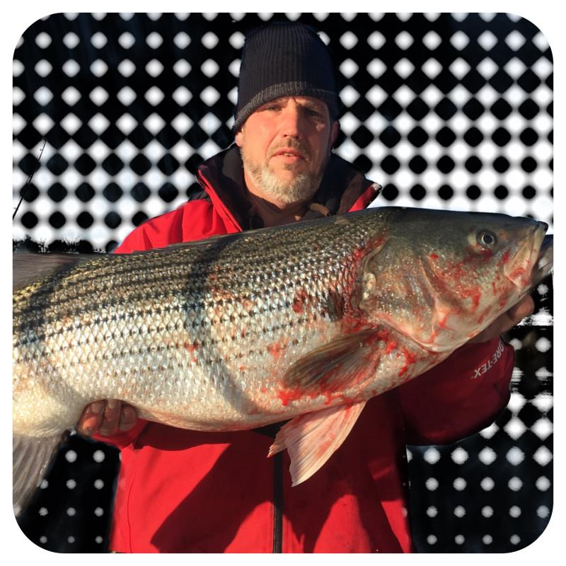 Smith Lake Striped Bass Caught By Brian Farley Of Fishing 24-7 Guide Service