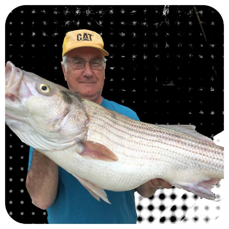 Striped Bass Caught On Trip With Brian Farley