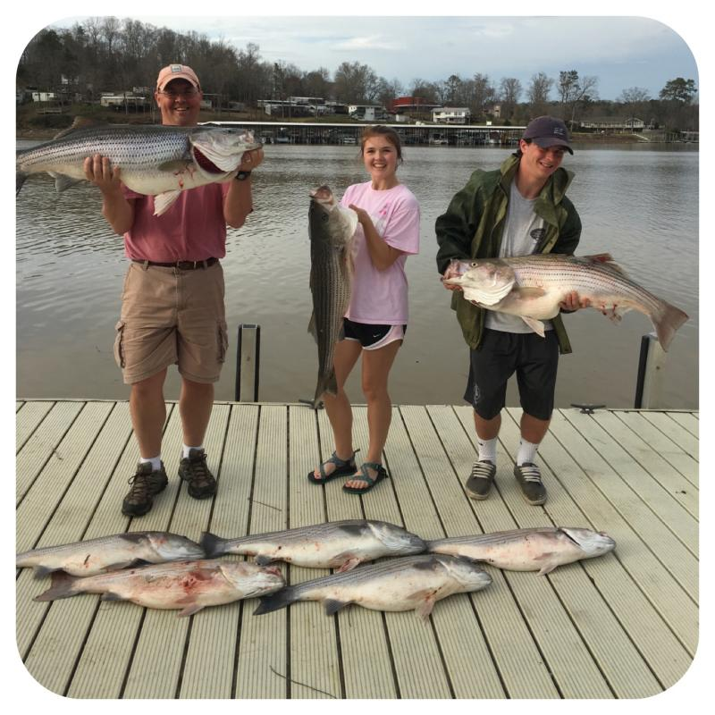 Smith Lake Striped Bass Caught By Fishing 24-7 Guide Service