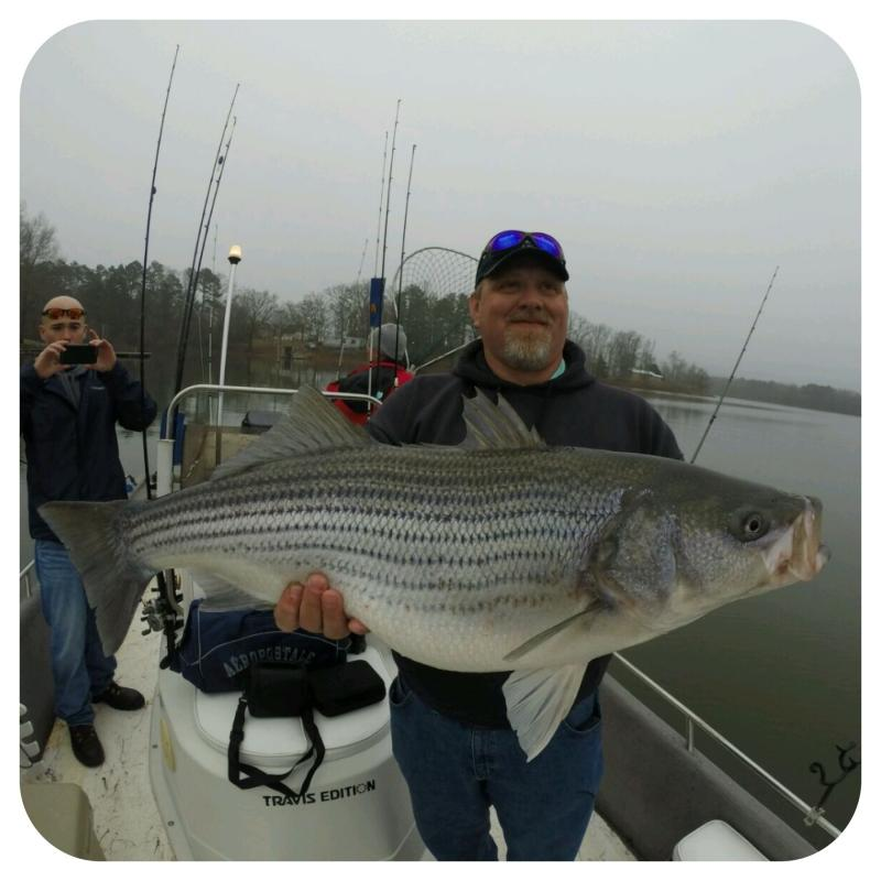 Big Smith Lake Striped Bass Caught By Fishing 24-7 Guide Service