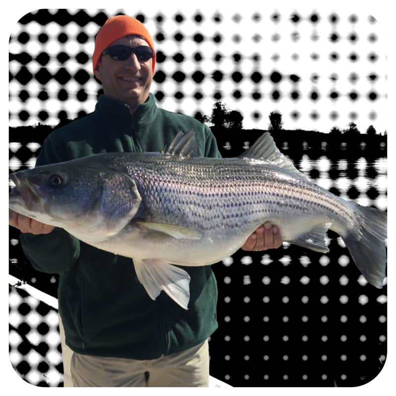 Client Holding Striper Caught During Trip With Fishing 24-7 Guide Service