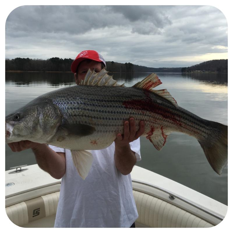 Mike Walker - Owner Of Got You Hooked Striped Bass Guide Service, Lake Martin.